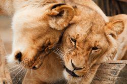animal de poder; xamanismo; cura xamânica