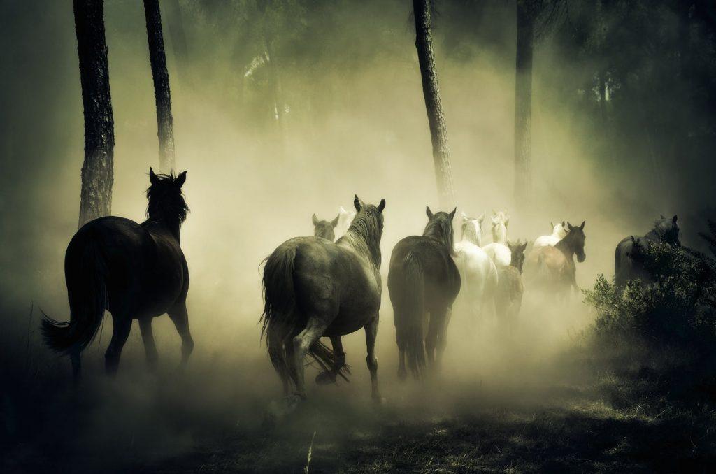 xamanismo; sofia frazoa; animal de poder